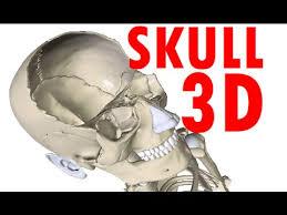 Human Anatomy Skull Bones Skull Anatomy Bones And Structures Head Anatomy 1 Youtube