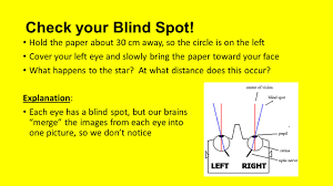 Blind Spot Left Eye The Human Eye Lg I Can Describe The Parts And Function Of The