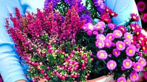 pflanzen fã r den balkon herbst balkon pflanzen artownit for