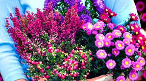 herbst balkon pflanzen artownit for - Blumen Fã R Balkon