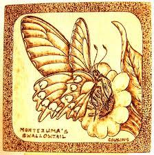 detailed pyrography 2011 montezuma s swallowtail