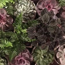 houseplants u2014 tvg