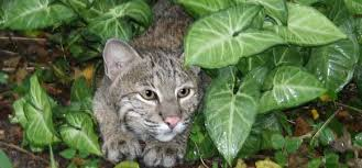 poisonous plants and what how to keep your cat safe