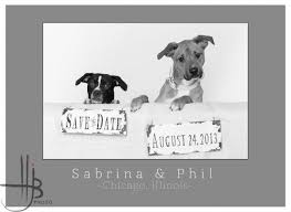 unique save the dates dogs enlisted to create unique wedding save the date cards hjb