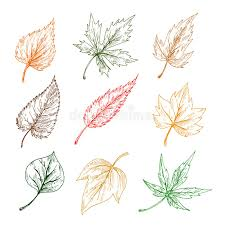 leaves of trees sketch icons stock vector image 74984462