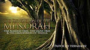 menorah tree of the mystery of the menorah and the almond tree pastor ely