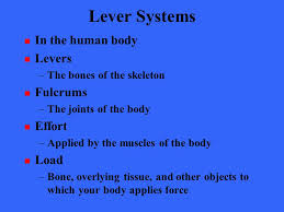 levers in the human body worksheet the best and most
