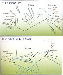 tree of life who produced the first tree of life