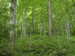 Ohio forest images Hello my name is scarlet oak cfaes jpg