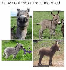 baby donkeys are so underrated drsmashlove donkey meme on me me