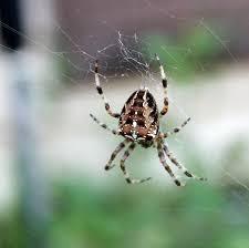 my mountain garden gleanings spiders in my yard