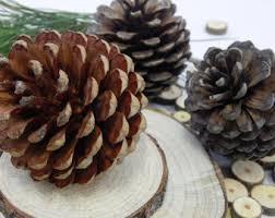 pine cone etsy