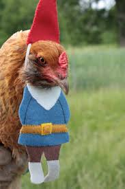 10 chicken costumes to get your coop ready for