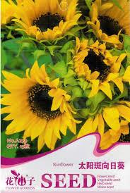 15 sunspot sunflower seeds helianthus annus beautiful garden