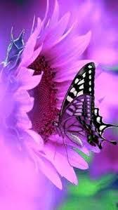 pictures of butterflies search butterflies