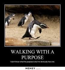 Funny Penguin Memes - a penguin walking with a purpose memey com