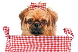 dog ribbon 10 dog grooming fails and how to avoid them