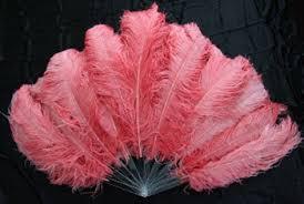 burlesque fans wiggle wednesday oasis aqualounge