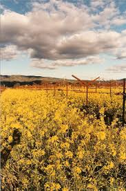 How Many Square Feet In Half An Acre How Much For An Acre Of Napa Valley Vineyard Land