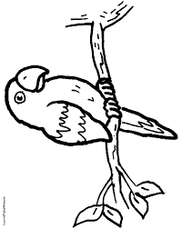 parrot coloring pages animals printable coloring pages coloringzoom
