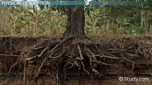types of roots lesson for kids video u0026 lesson transcript