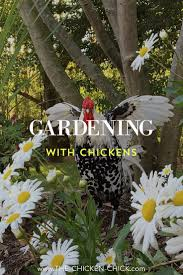 Gardening With Rocks by The Chicken Chick Landscape Gardening With Chickens