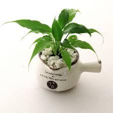 indoor plants india buy pot indoor plant online in india farmandgarden in