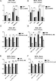 bacterial siderophores hijack neutrophil functions the journal