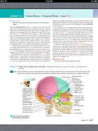 principles of anatomy and physiology chapter 7 the skeletal