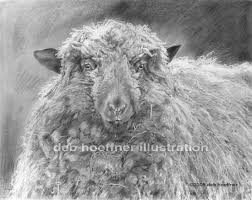 sheep drawing howell farm dreadlocks realistic animal pencil