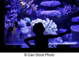 ornamental fish images and stock photos 3 219 ornamental fish
