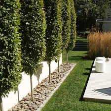 best 25 privacy landscaping ideas on privacy trees