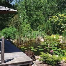 Backyard Pond Images Diy Natural Backyard Pond Diy Mother Earth News