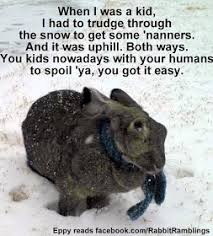 Funny Rabbit Memes - rabbit ramblings funny bunny memes rabbits pinterest funny