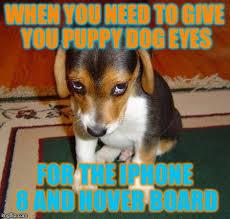 Puppy Dog Eyes Meme - sad puppy imgflip