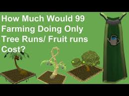 Fruit Trees Runescape - runescape how much would 1 99 farming cost doing only tree and