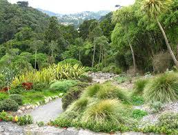 New Zealand Botanical Gardens Botanic Gardens Wellington New Zealand Photograph By Gretchen Wrede