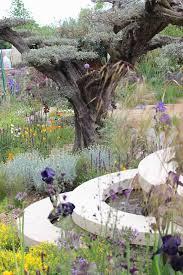 Homebase Garden Remembering Chelsea Flower Show 2015 The Smell Of Roses The