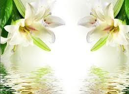 white lillies 3d wallpaper for room white lilies simple background wall