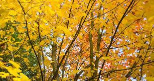 Leach Botanical Garden Portland Oregon Attractions Leach Botanical Garden
