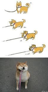 Doge Meme Pictures - doge meme viral viral videos