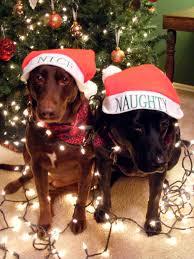 my dog bella u0026 chloe for our christmas lights card idea 2010 my