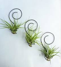 8 wall mounted plant holders tags 44 impressive wall plant