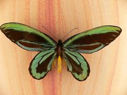 10 surprising facts about butterflies mental floss