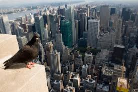 New York wild animals images Rehabilitating new york city 39 s wildlife scienceline jpg