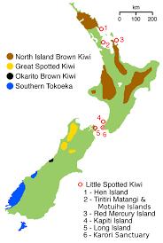 kiwi wikipedia