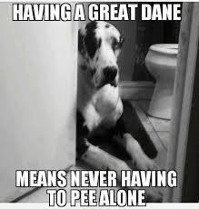 Great Dane Meme - 12 best great dane memes of all time