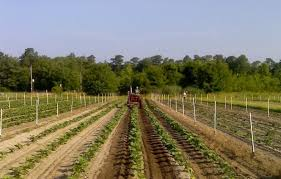 How To Get Usda Certified For Many Small Farmers Being Certified U0027organic U0027 Isn U0027t Worth The