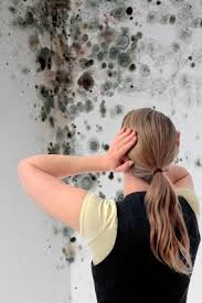 selling a home with mold what you need to know