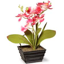Orchid Cut Flowers - national tree co spring orchids flowers in pot u0026 reviews wayfair